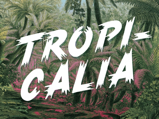tropicalia-brush-typeface-by-rocco-barbaro