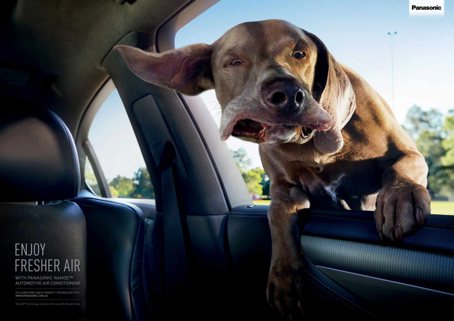 billboard-design-tips-and-examples-confused-dog