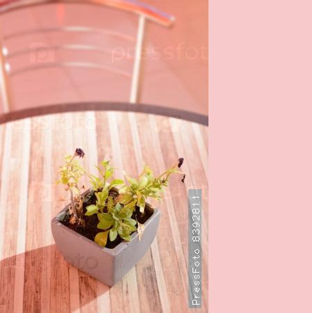 pantone-introduced-spring-2016-palette-1-2
