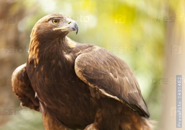 the-animals-you-must-see-project-by-ifaw-eagle