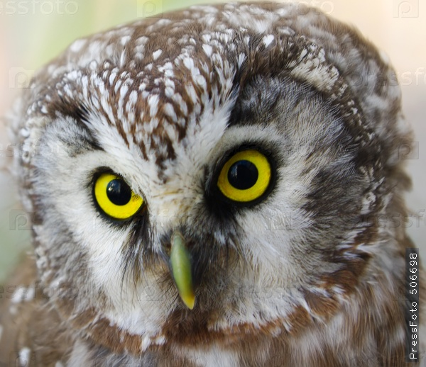 the-animals-you-must-see-project-by-ifaw-owl